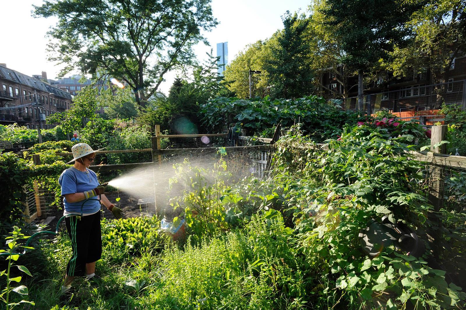 Women watering garden
