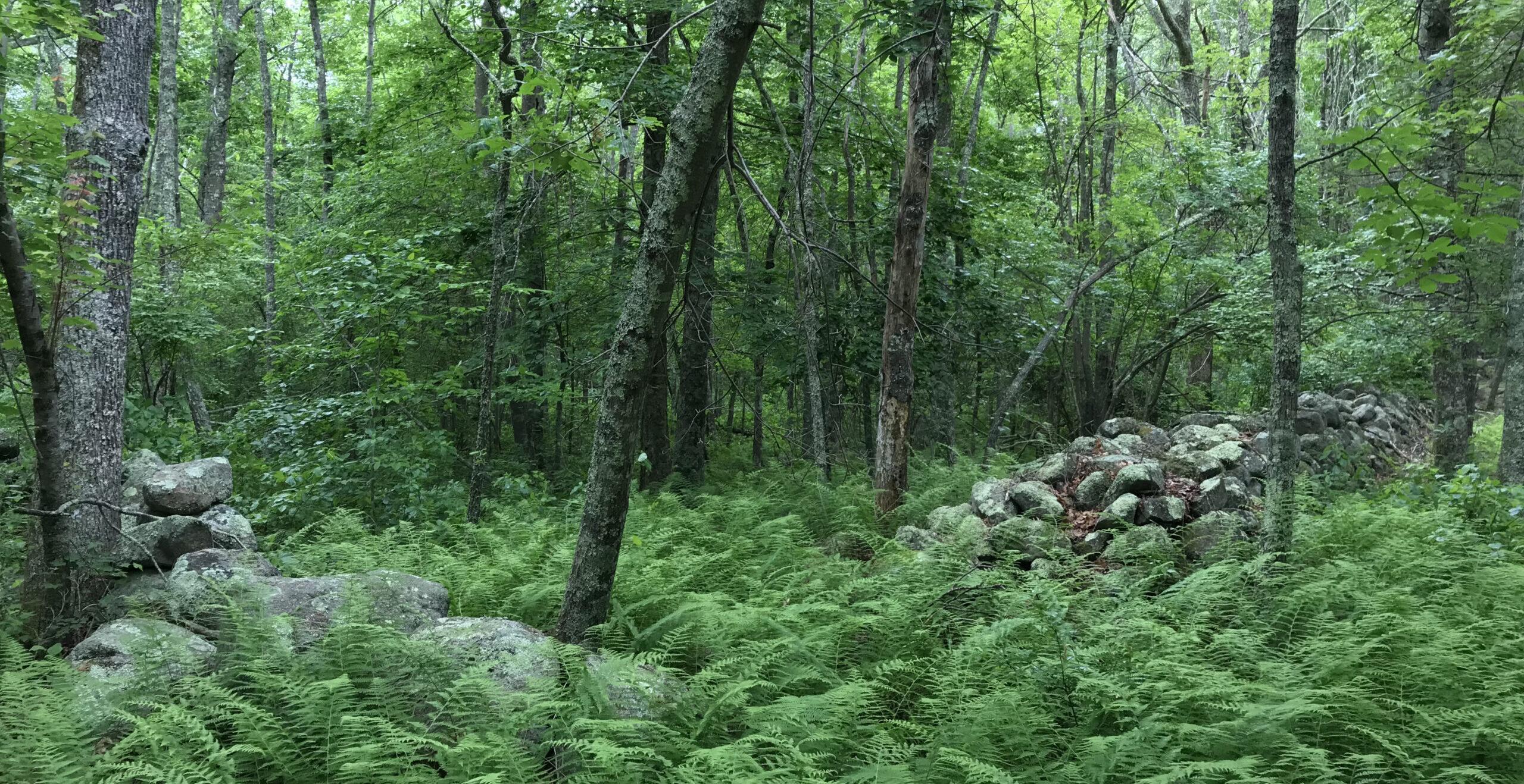 Copicut Woods (PMarotta)