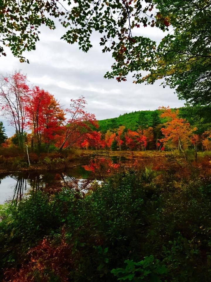 Fall foliage along the shores of Tully Lake