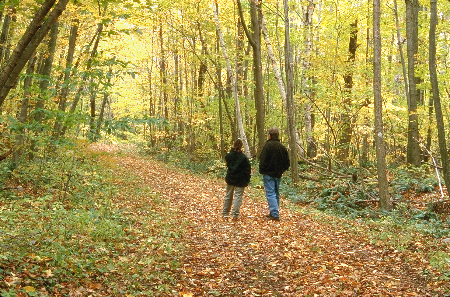 Two people walking down a trail with fall foliage