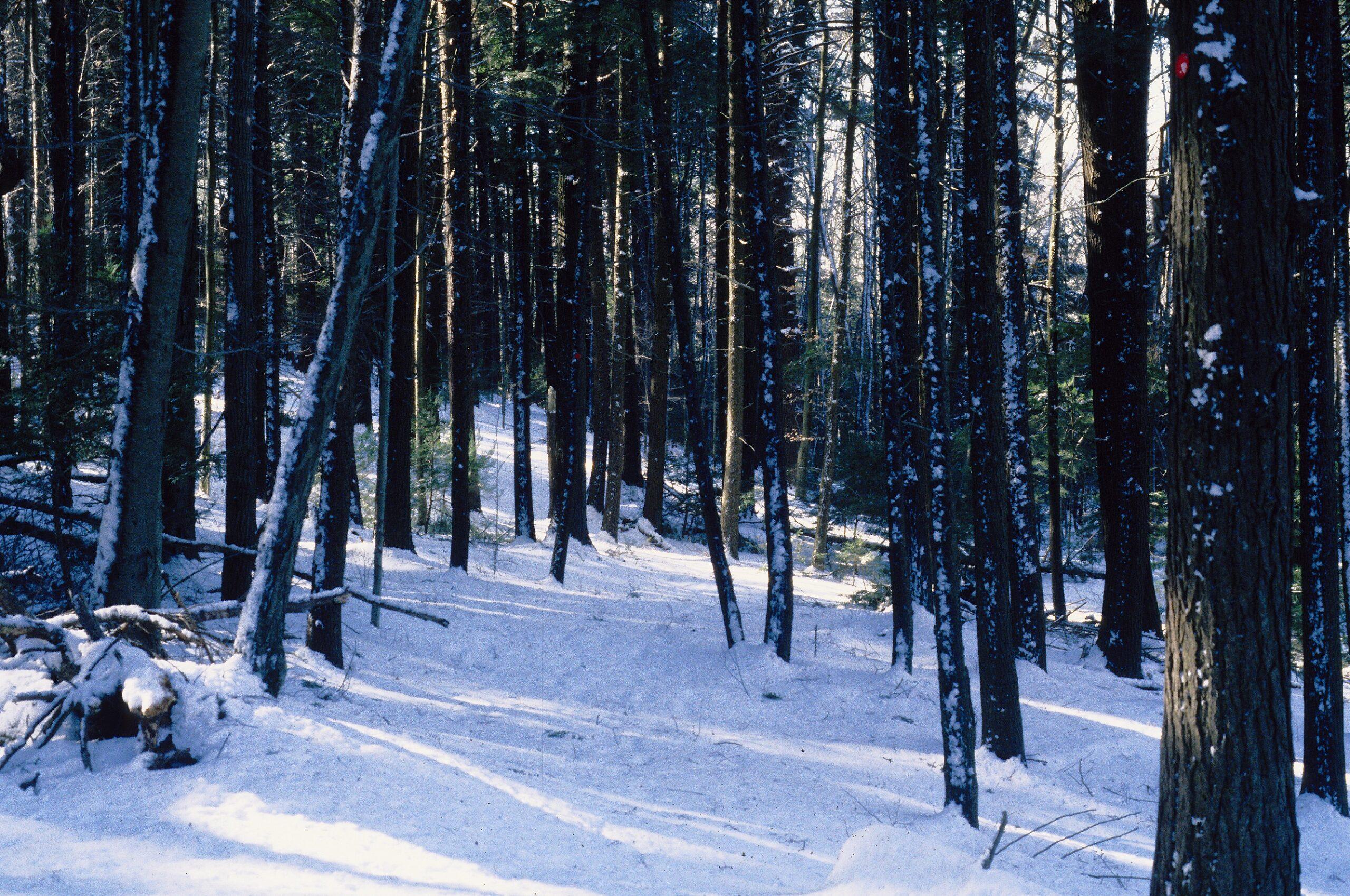 Pine & Hemlock Knoll