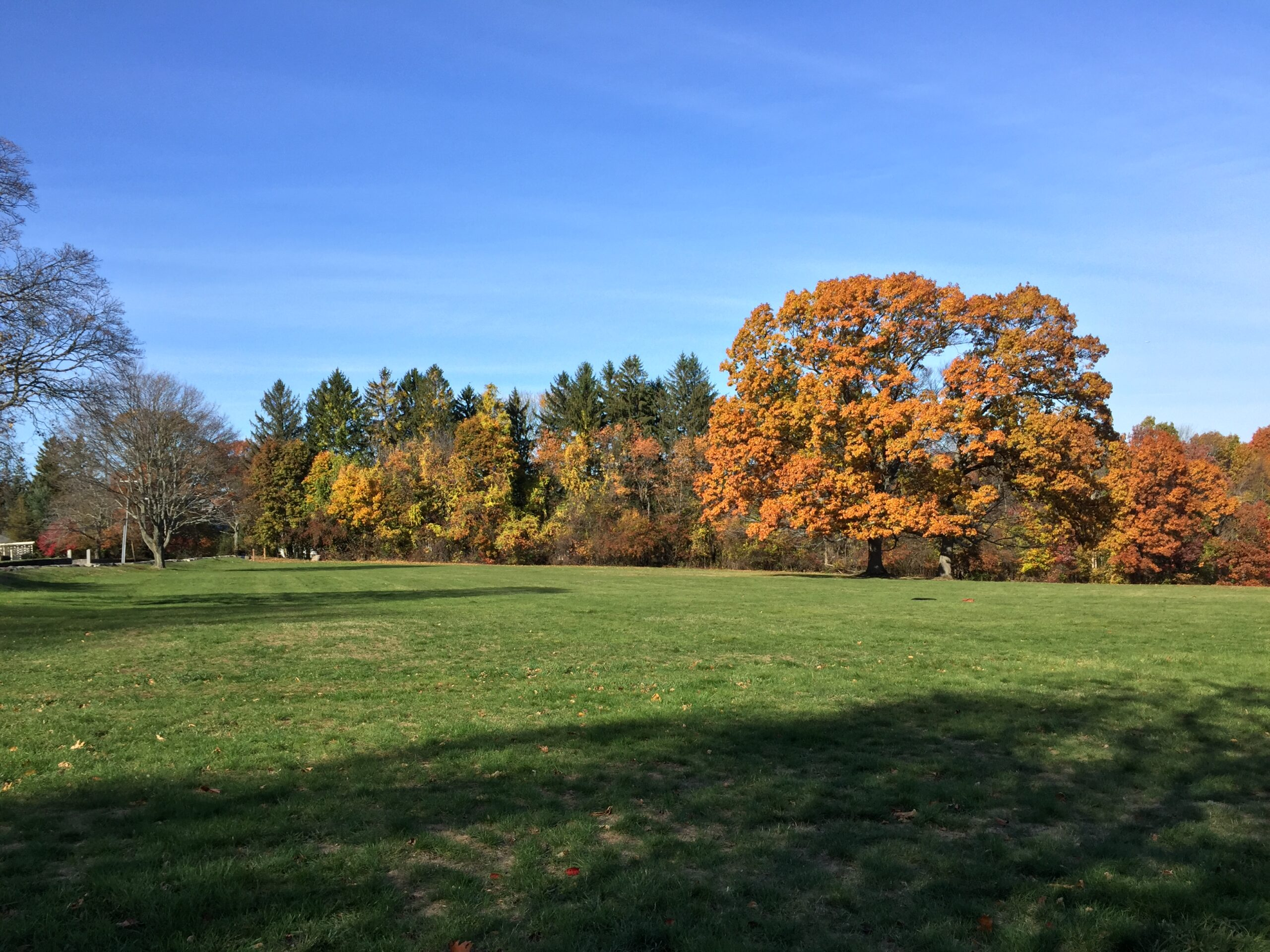 a green field with fall colors and a blue sky