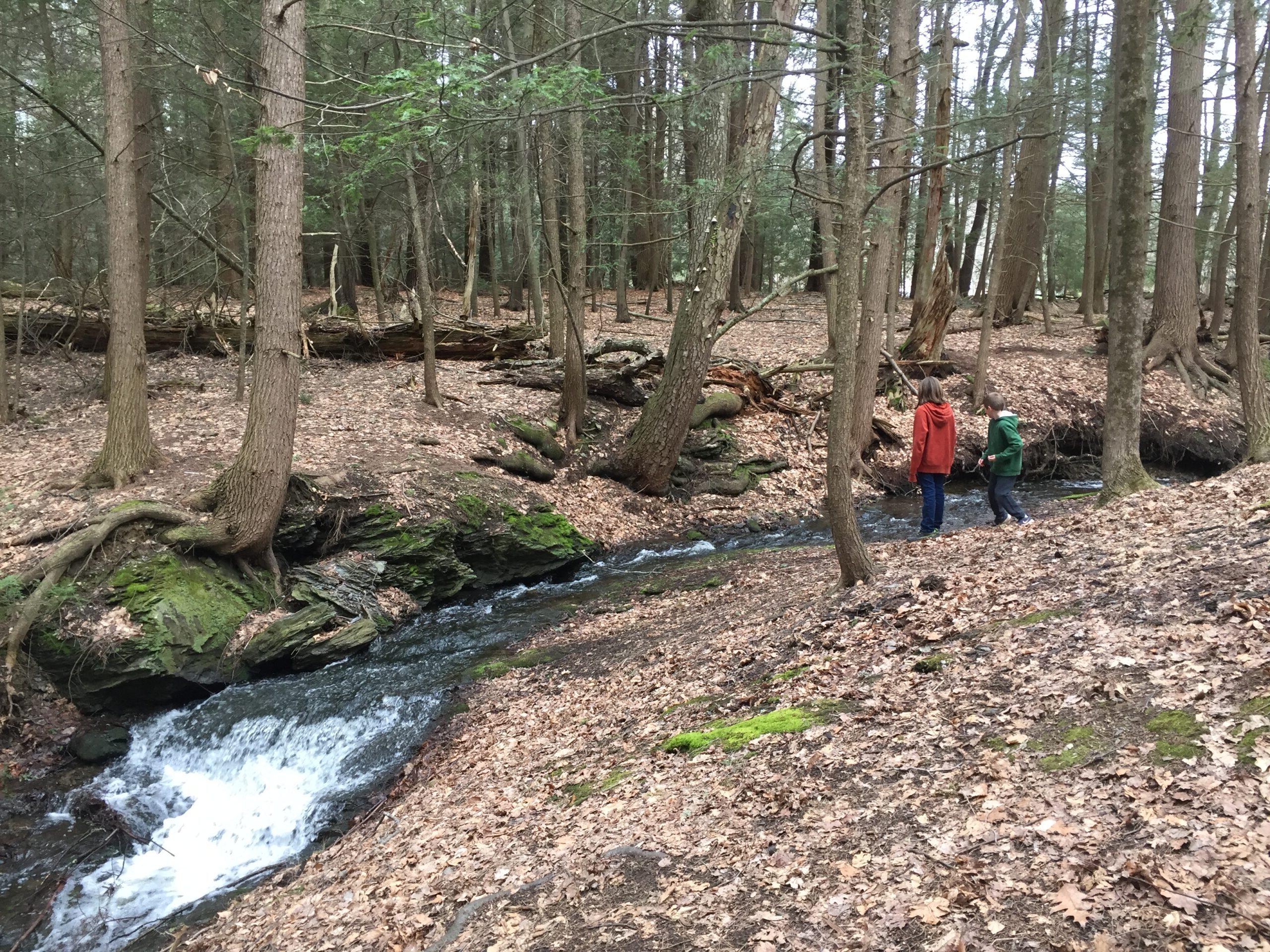 Kids playing by river among hemlocks