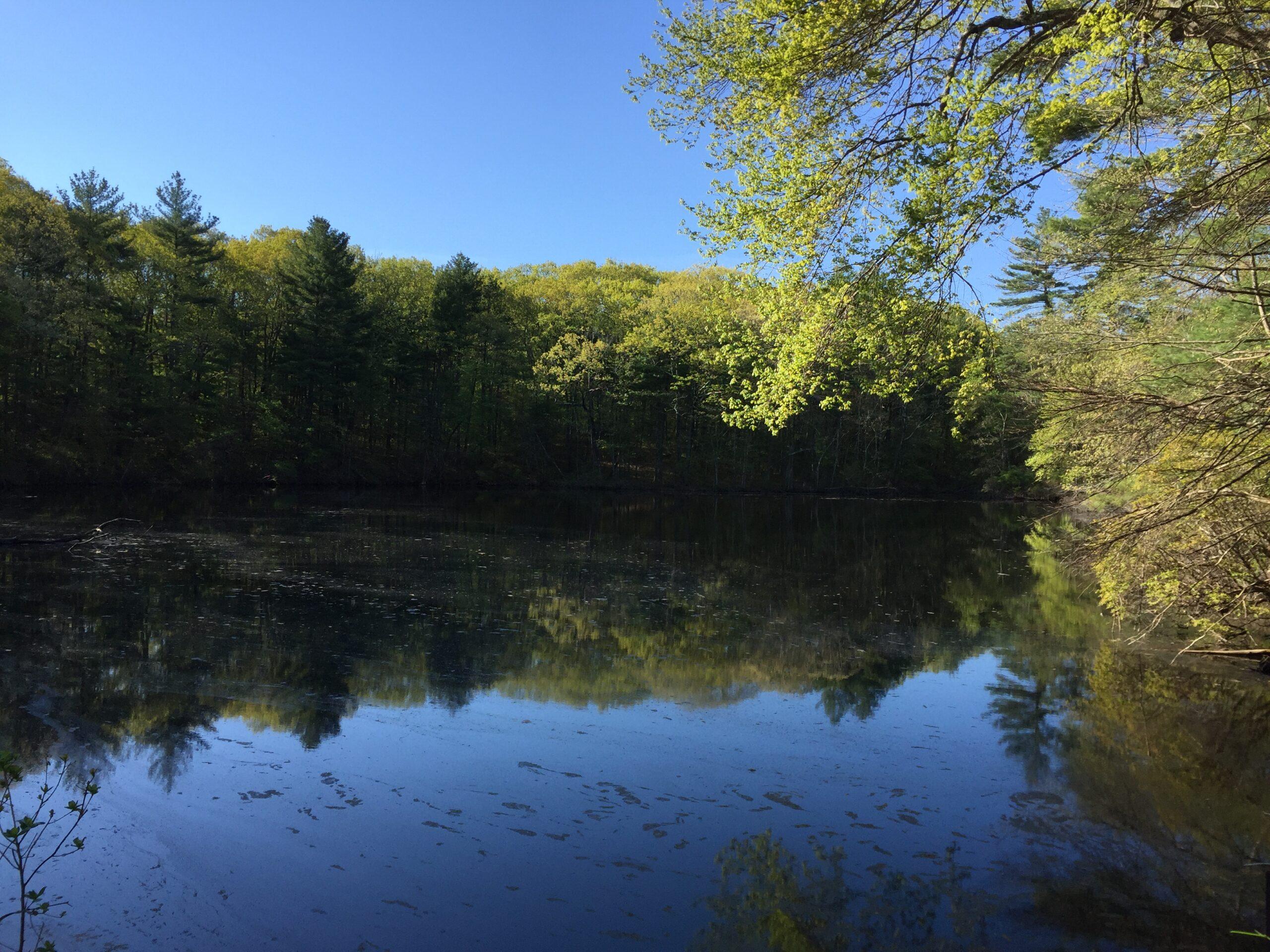 Noanet Woodlands
