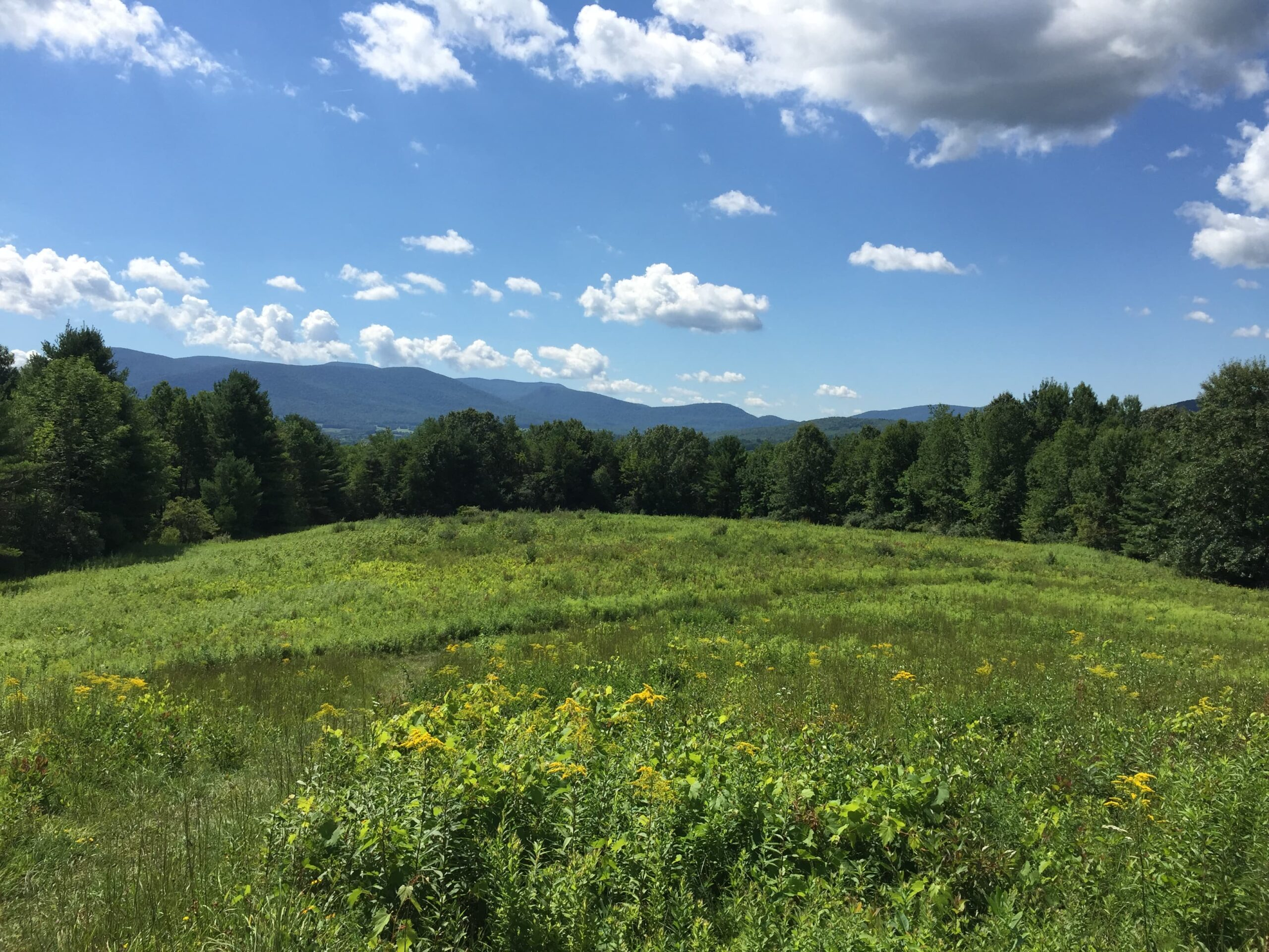 Mountain Meadow Preserve