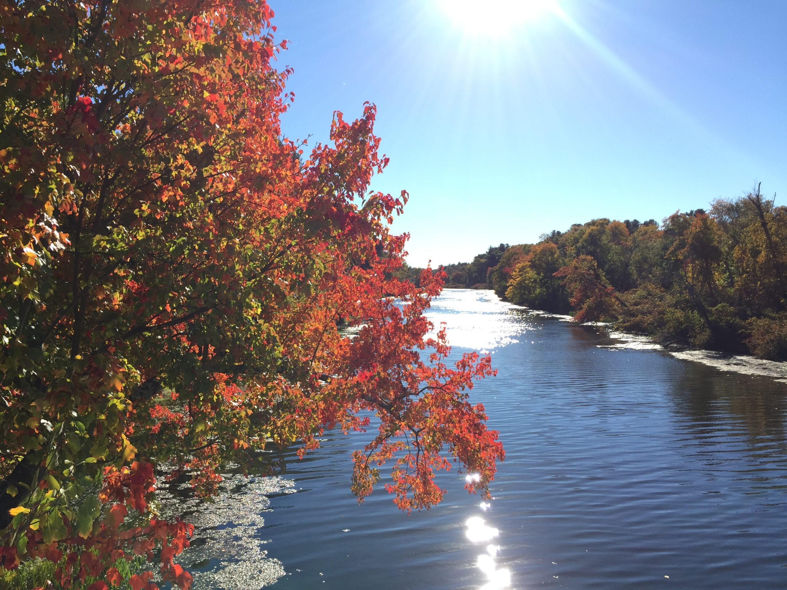 Fall foliage along the banks of the Charles River at Rocky Narrows