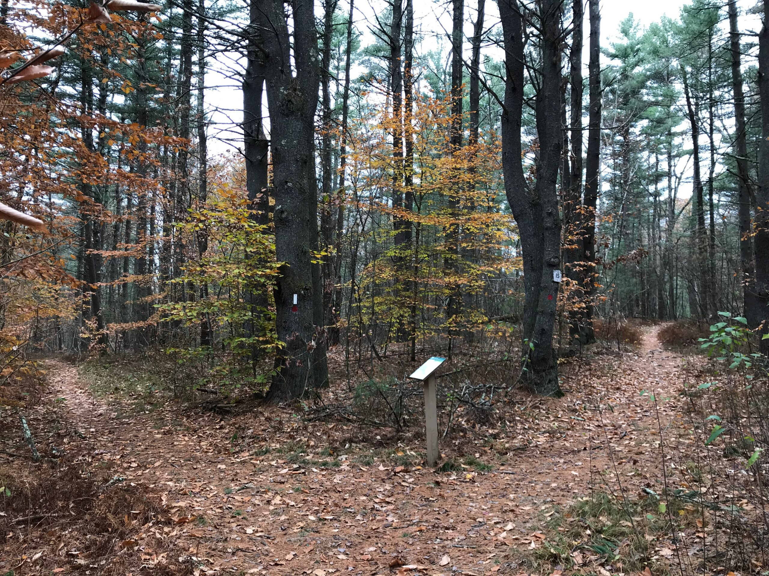 Late fall foliage along trail at Shattuck Reservation