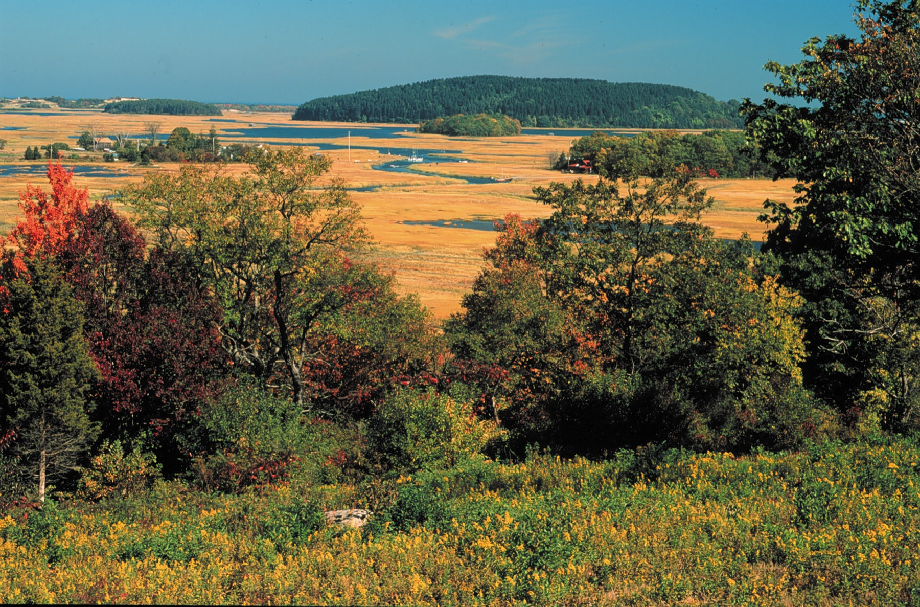View of the salt marsh in late summer from Stavros