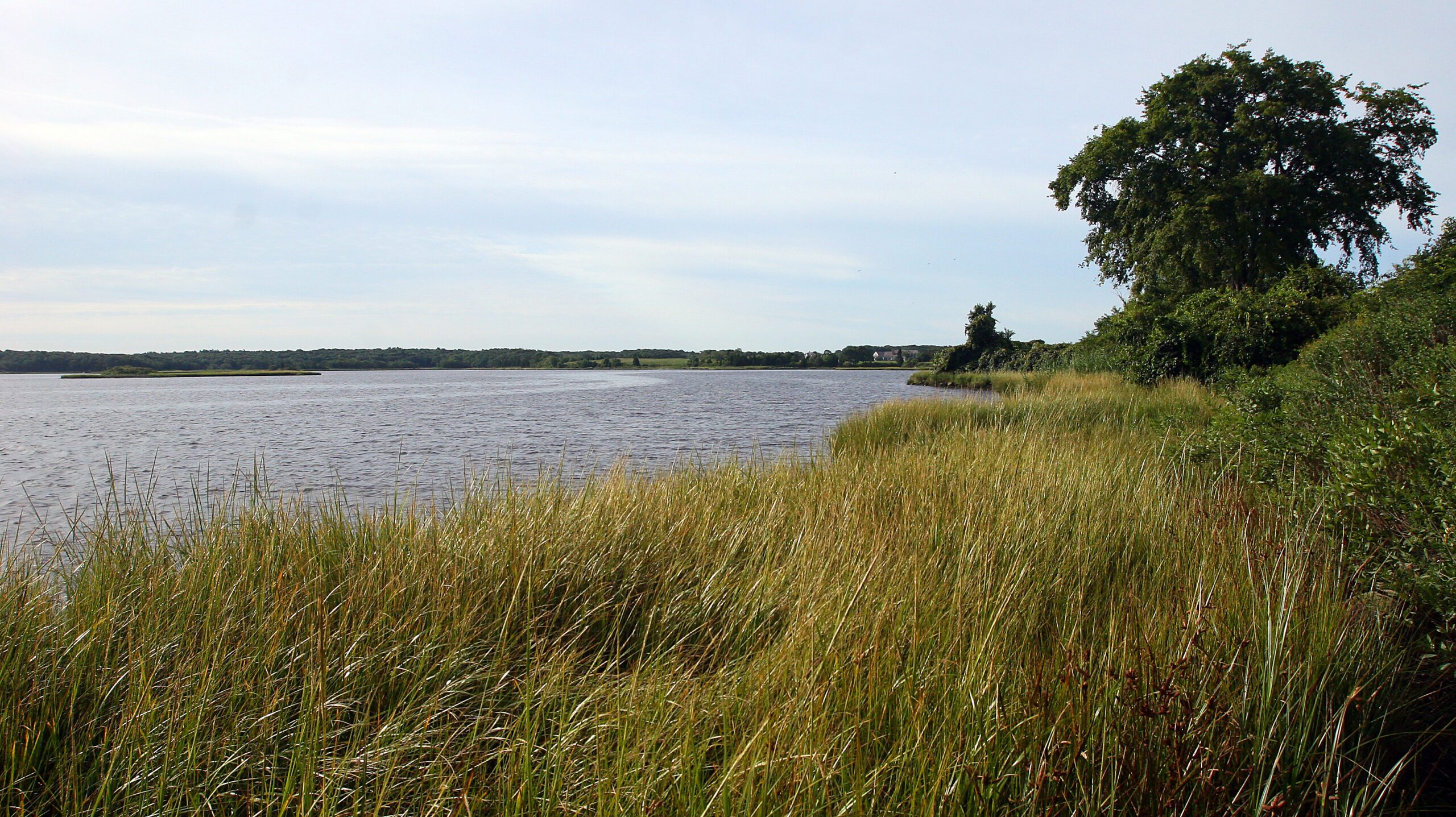View of tidal river from the banks