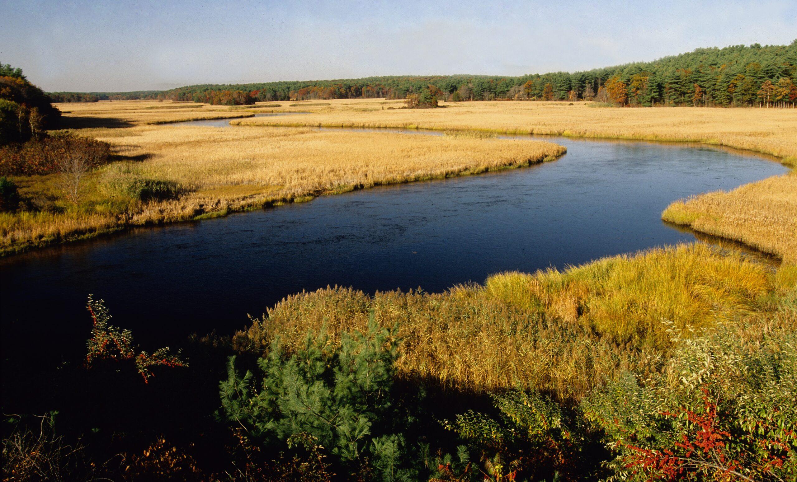 Winding tidal river among marsh grasses