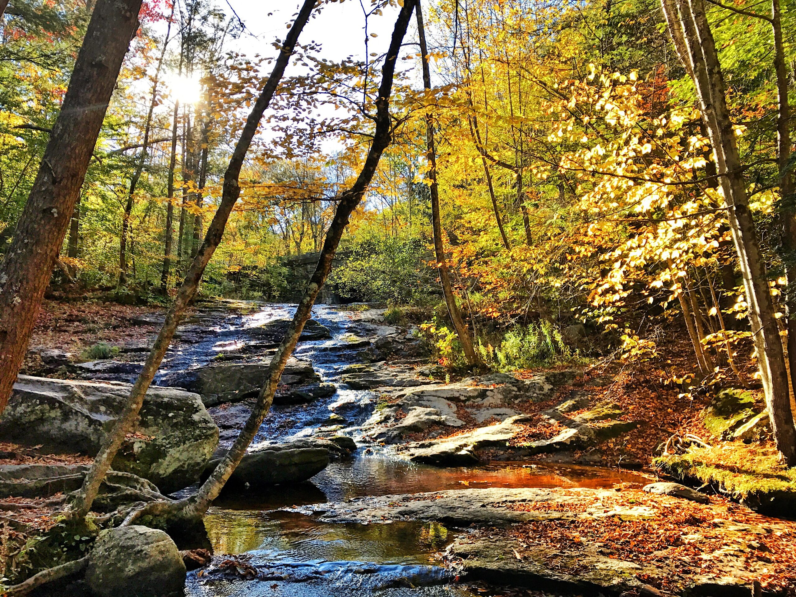 Chapel Brook in Fall