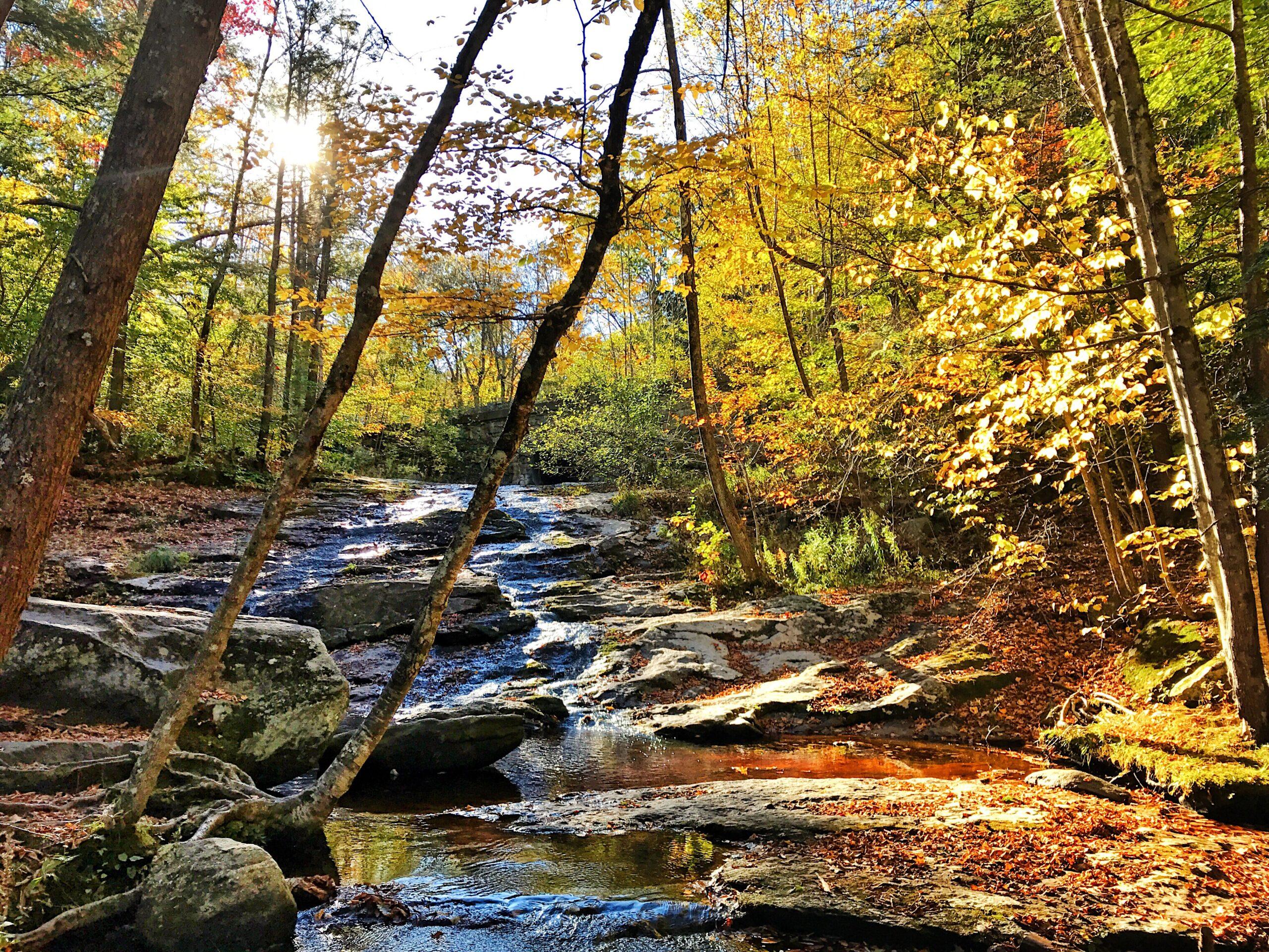 Chapel Brook in Fall