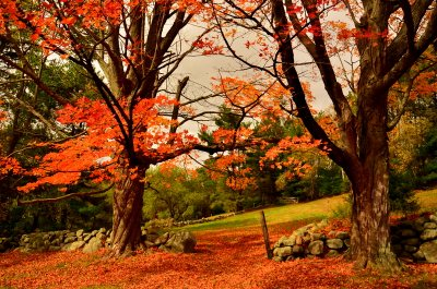 Ward Foliage