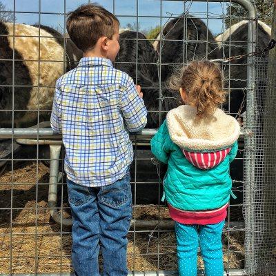 april preschool farm explorers