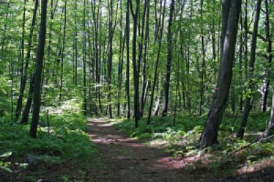 CHF Wooded Trail - no people