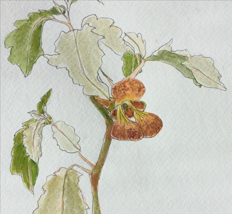 Botanical Illustrations with Nanci Worthington