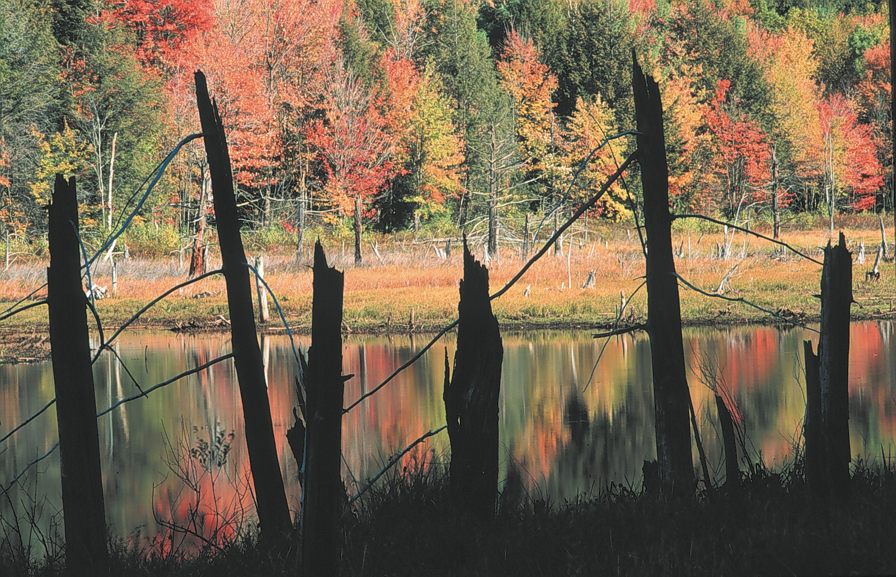 Fall foliage across body of water with snags in foreground