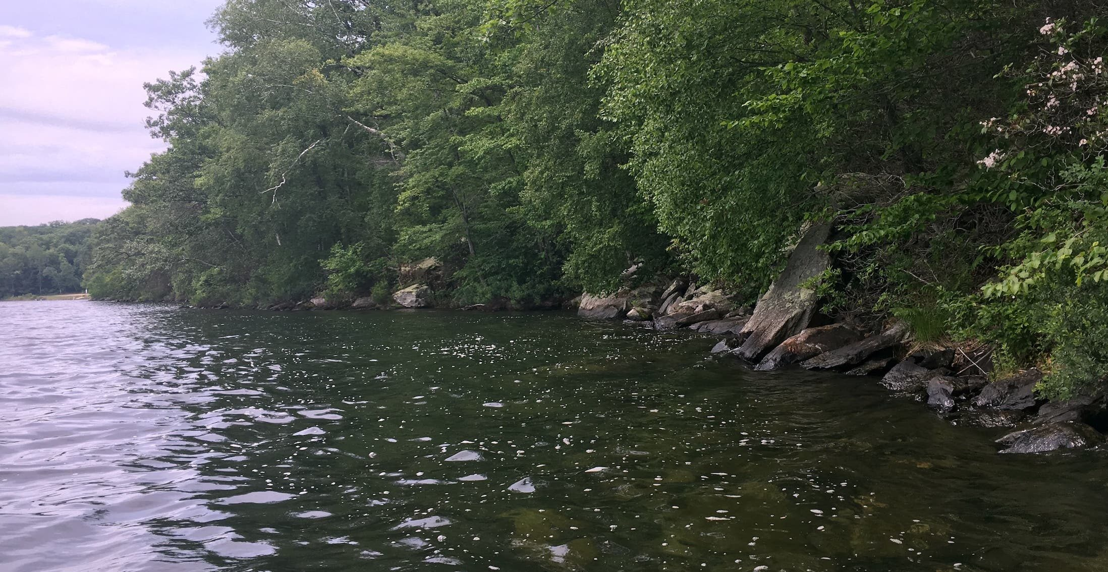Goose Pond shoreline