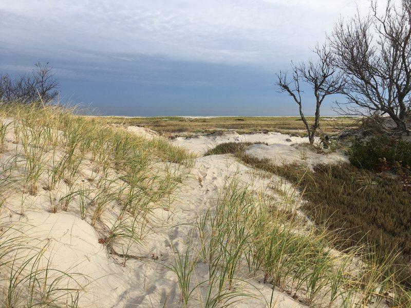crane beach dune