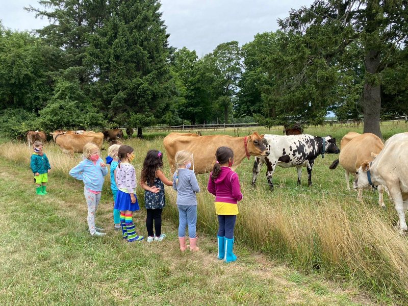 kids and cows