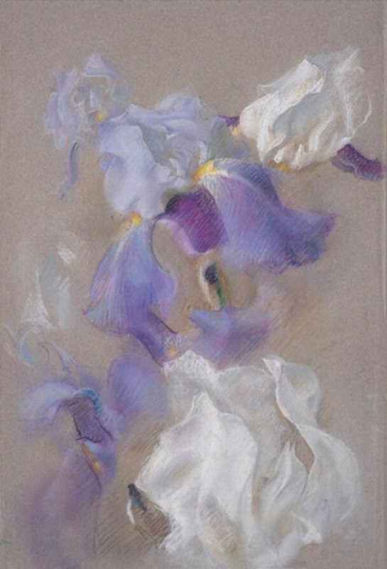 Polly Thayer Starr Iris