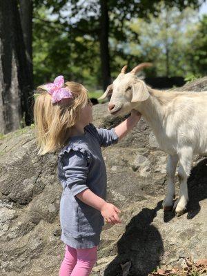 preschool girl with goat