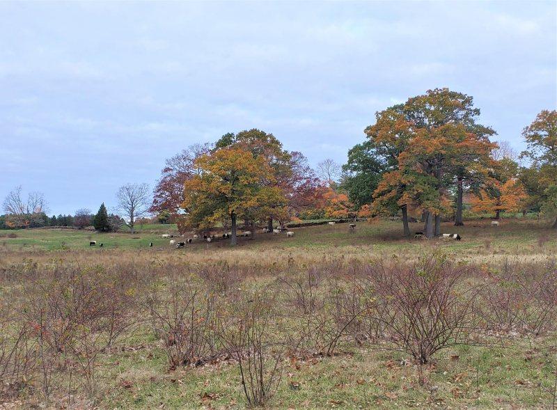 great pasture
