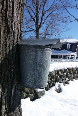 Sugaring Bucket