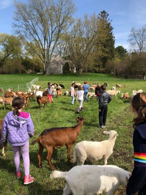 kids with goats