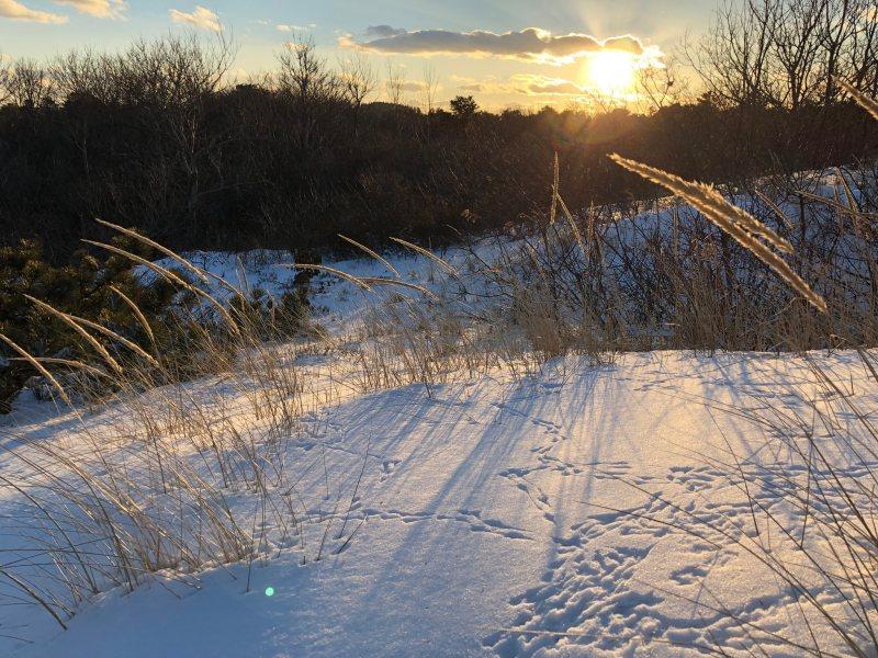 crane beach dune winter sunset