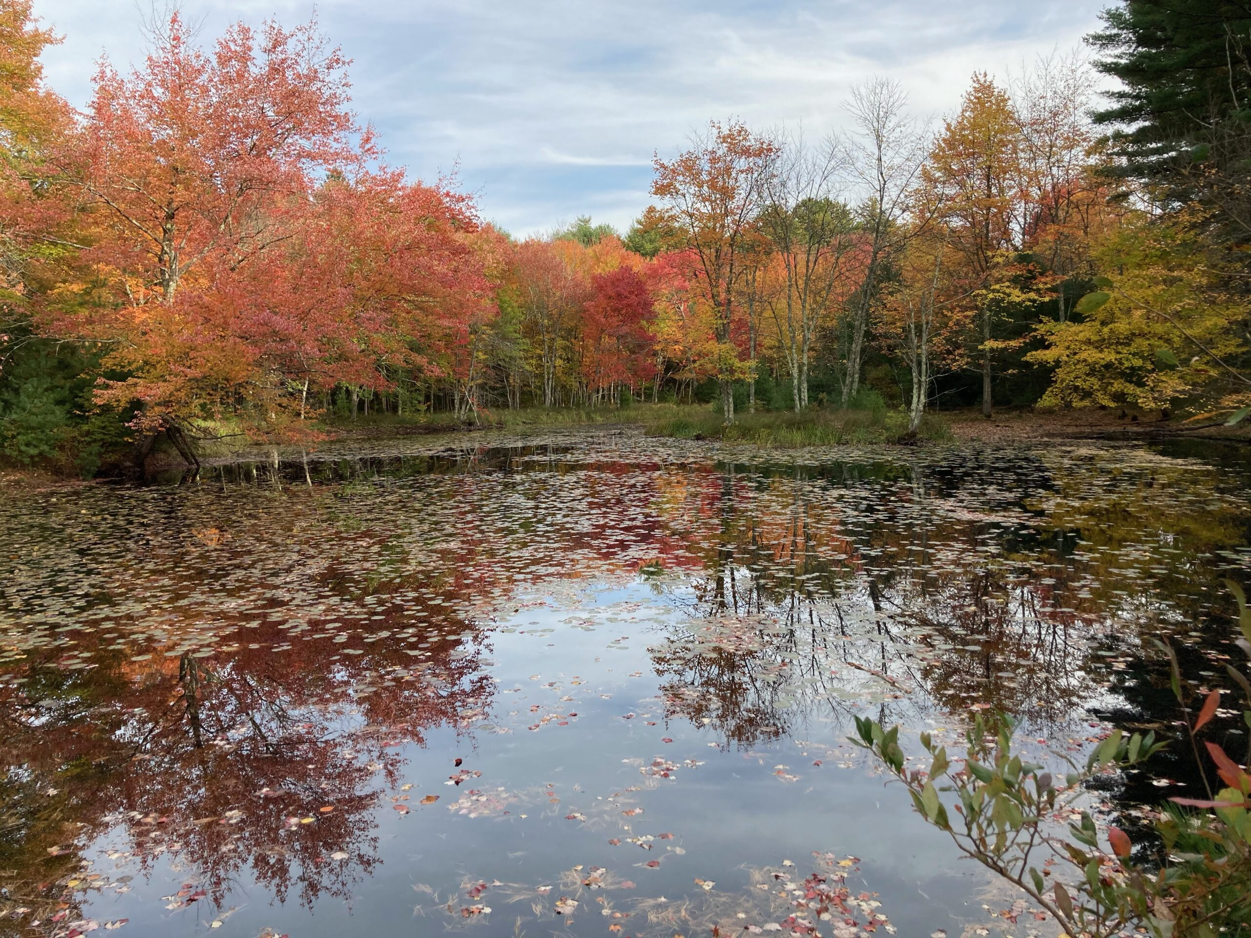A pond surrounded by trees with autumn colored leaves.