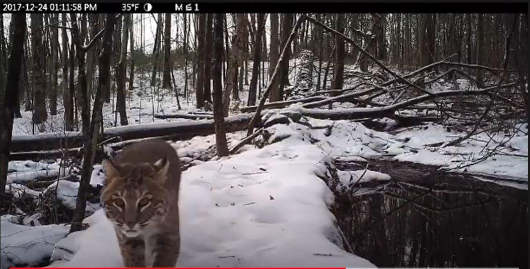 wildlife trail video