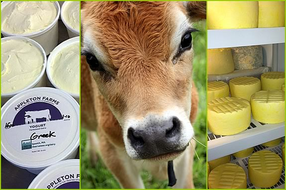 Appleton dairy