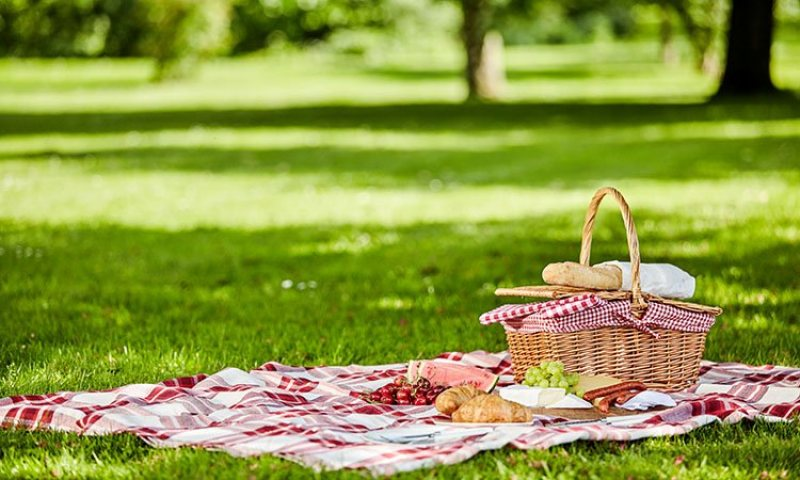 Picnics in the Field