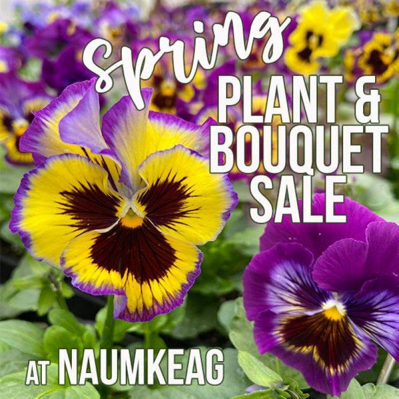 naumkeag plant sale