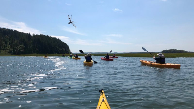 Kayak with Dragonfly