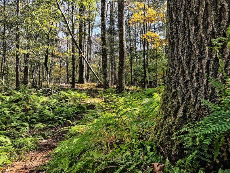 Moose Hill Farm Trail