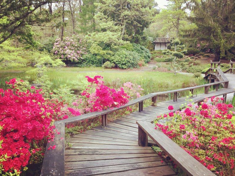 Mytoi Garden