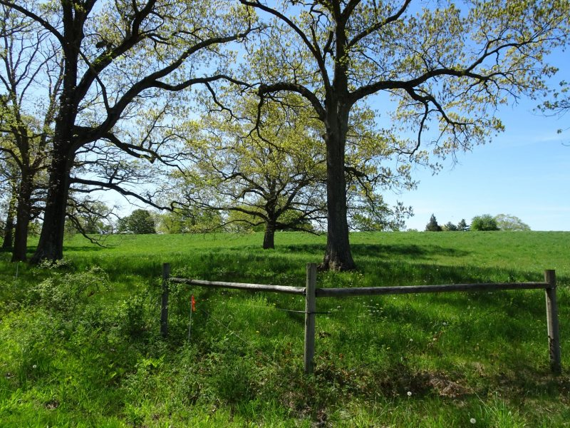 appleton hill