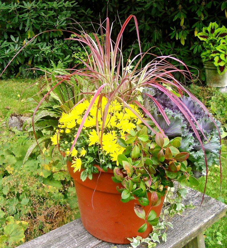 betsy planter