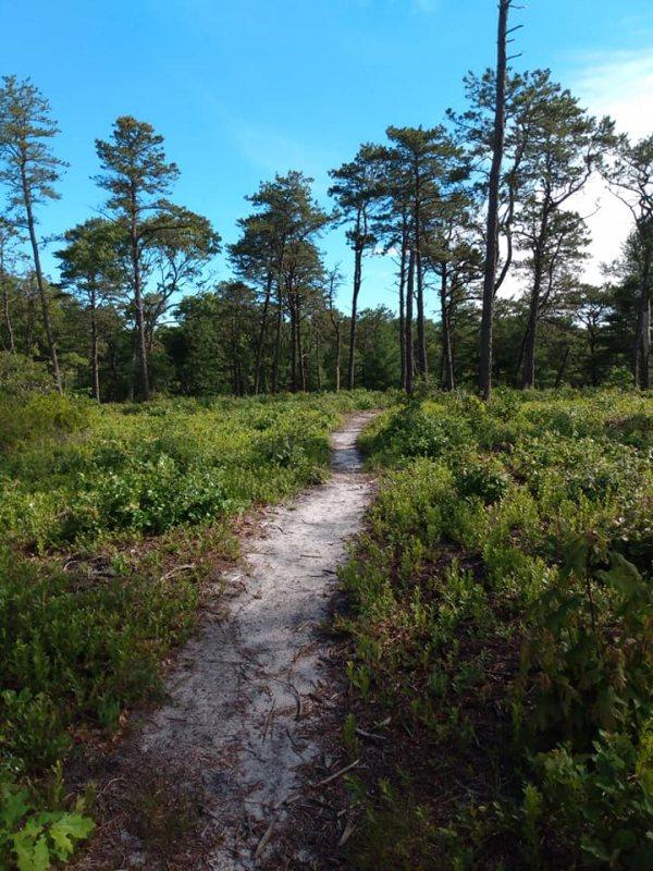 Lyman Trail