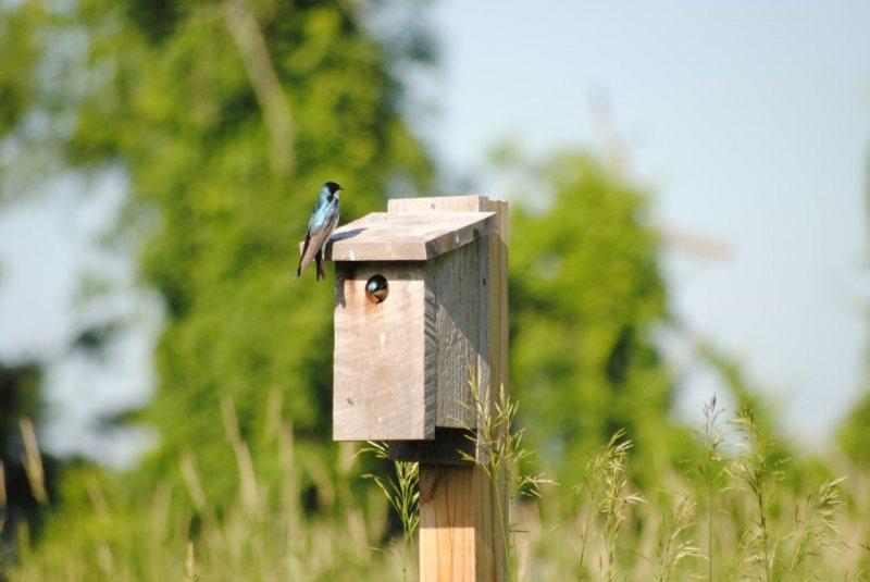 Birding at Bartholomew's Cobble