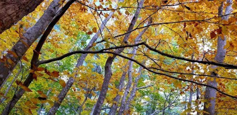 Fall at Copicut