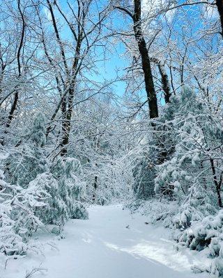 snow rocky woods