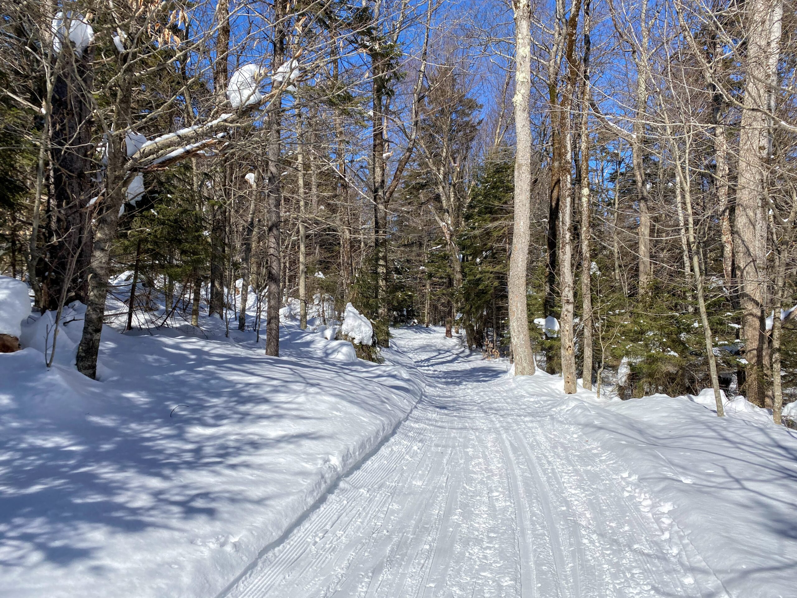 Snowy trail in the woods with ski tracks with blue sky background